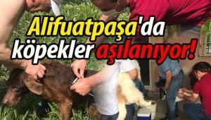 Geyve Alifuatpaşa'da köpekler aşılanıyor!
