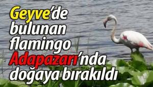Geyve'de bulunan flamingo doğaya bırakıldı