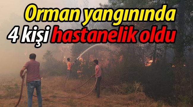 Orman yangınında 4 kişi hastanelik oldu