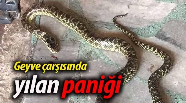 Geyve çarşısında yılan paniği
