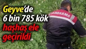 Geyve'de 6 bin 785 kök haşhaş ele geçirildi