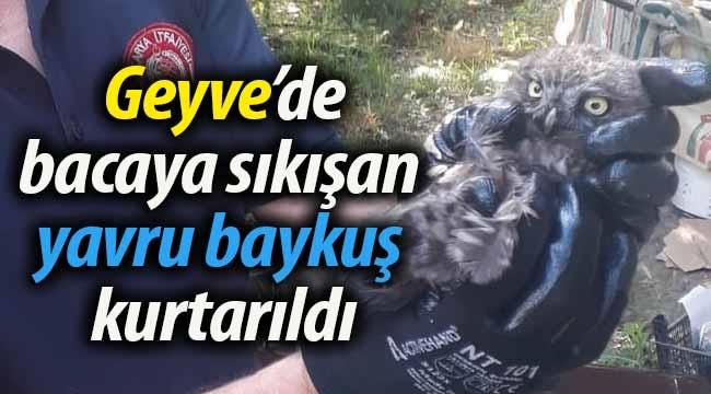 Geyve'de bacaya sıkışan yavru baykuş kurtarıldı